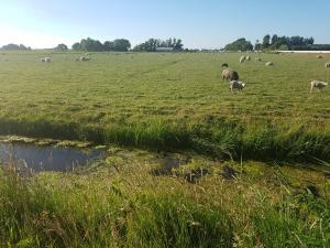 Uitzicht op schapen - Camping de Boerenzwaluw